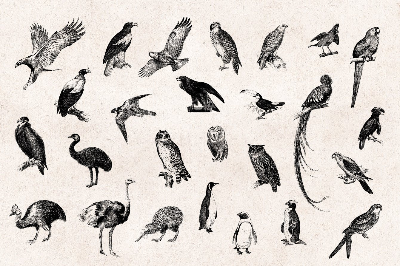 手绘鸟类插画背景图案Birds - Vintage Engraving Illustration Set