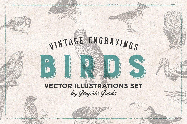 手绘鸟类插画背景图案Birds - Vintage Engraving Illustration Set