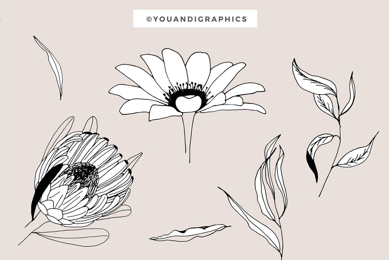 创意植物鲜花图案花卉图案与元素背景纹理Graphic Flowers Patterns & Elements