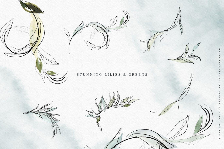 一组精美的图形铅笔百合与水彩画素材(JPG)stunning-lilies-9GAQGEF