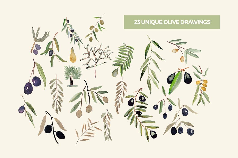 手绘图案橄榄树水彩收藏树叶树木背景图案纹理Olive Garden Watercolor Collection
