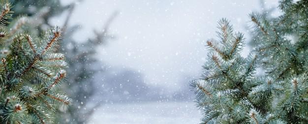 冬天下雪的树林场景背景designshidai_beijing76