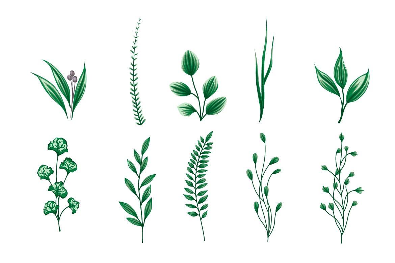 20个简约可爱的优雅植物树叶绿叶矢量插画集合designshidai_beijing89