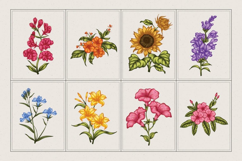 时尚高端优雅简约风格的矢量花朵花卉植物插画集合designshidai_chahua050